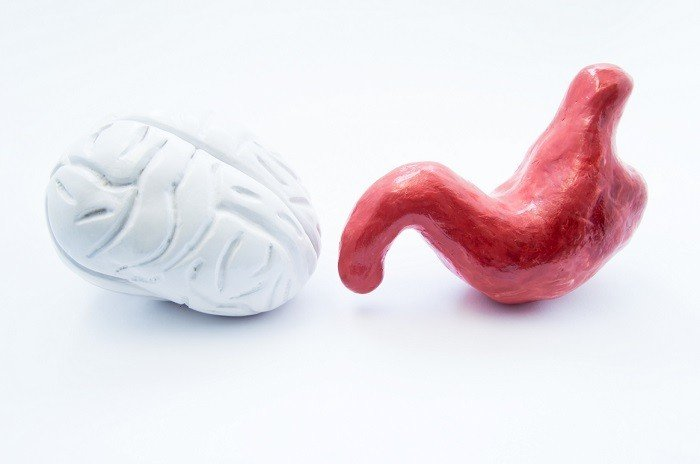 Microbiome Gut Brain Axis – What You Need To Know